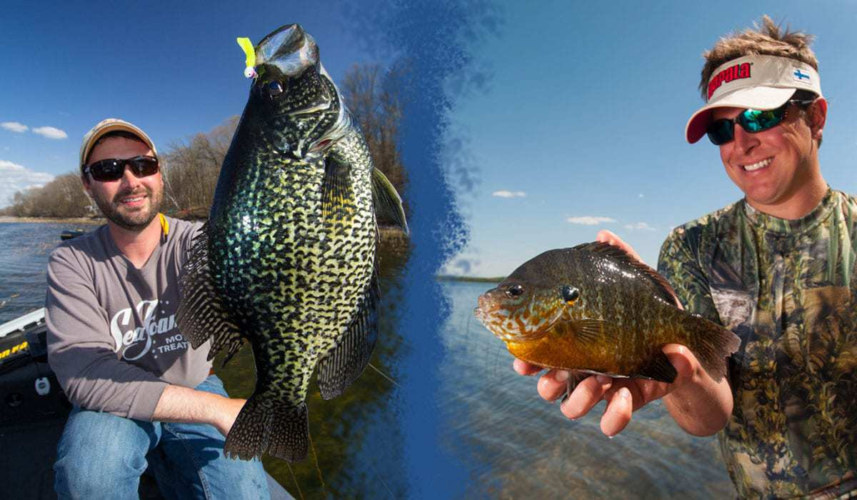 SPAWNING PANFISH