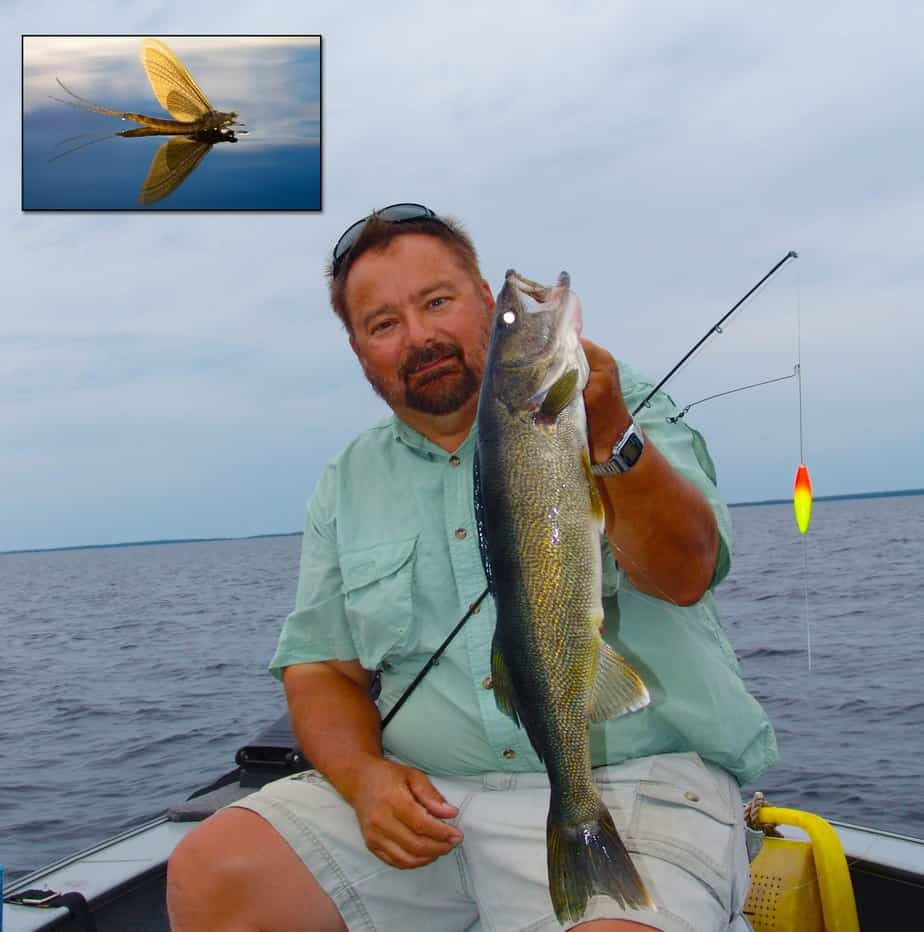 The Walleye-Mayfly Connection