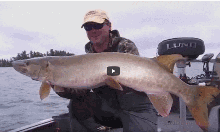 Musky Location Strategies in Summer
