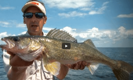 Spinners & Artificials Tantalize Summer Walleyes