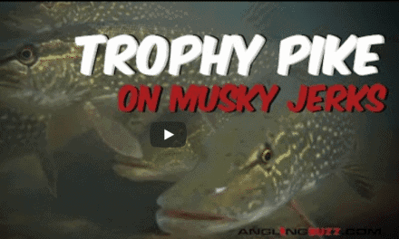 Toss Muskie-Sized Jerkbaits for Trophy Pike