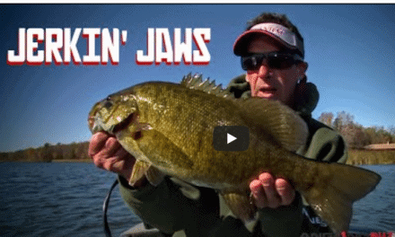 Jerkin' Jaws on Giant Fall Smallmouth Bass