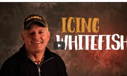 Whitefish on Ice for Fishing Fun