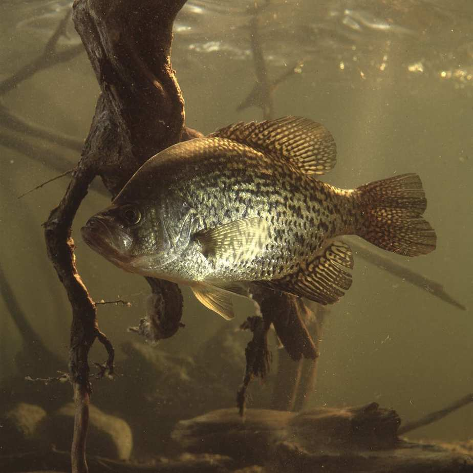 Spring Fishing: Stability, Warming Water and Food