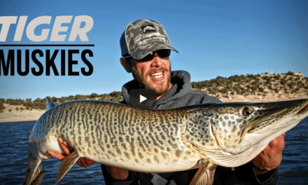 Tiger Muskies for Snowbirds