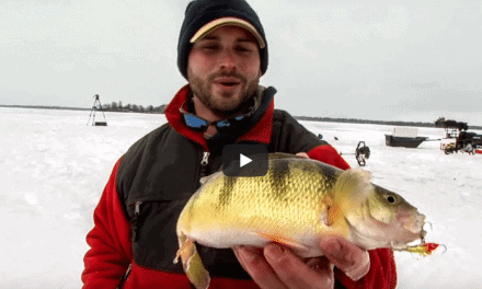 Jumbo Perch on Ice