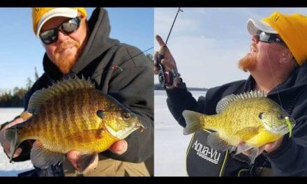 Minnesota Buzz Bite Report – Brian Brosdahl (Northern)