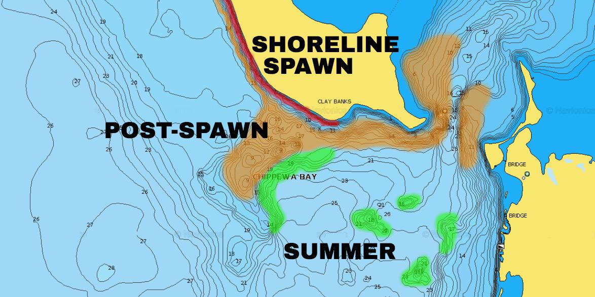 Lake Spawning Walleyes