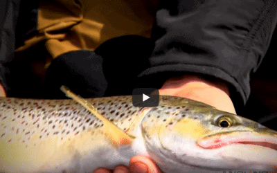 Trolling for Great Lakes Brown Trout