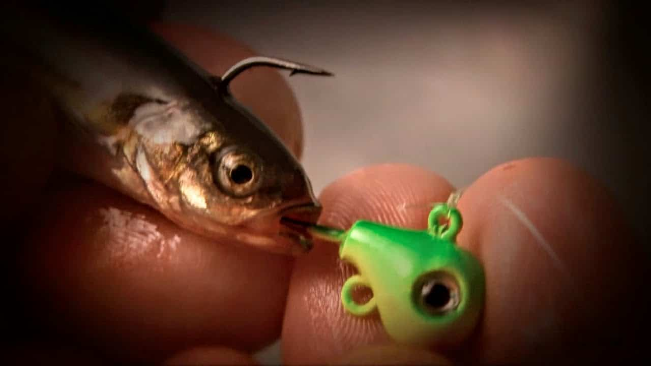 Jig and Minnow Fishing for Spring Walleyes
