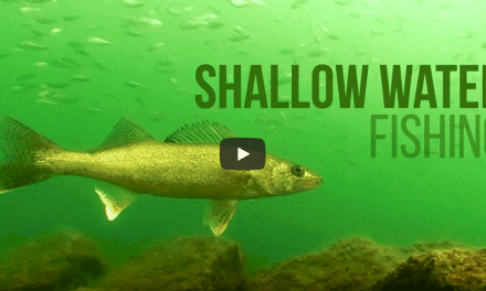 Why You Should Be Fishing Shallow Right Now