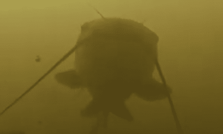 Catfish – Fishing Holes in Small Rivers