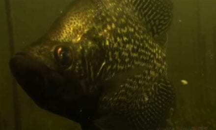 Early Fall Tactics for Slab Crappies