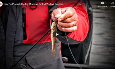 How To Properly Rig Big Minnows for Fall Walleye Success