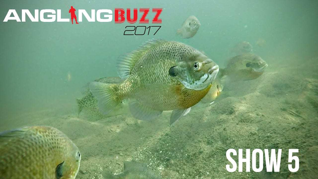 The Quality of Fishing Today — AnglingBuzz TV