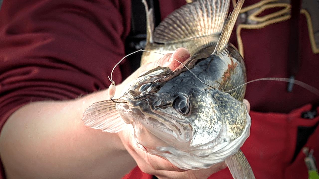 Lake Audubon (ND) Fishing Report – Peter Olson