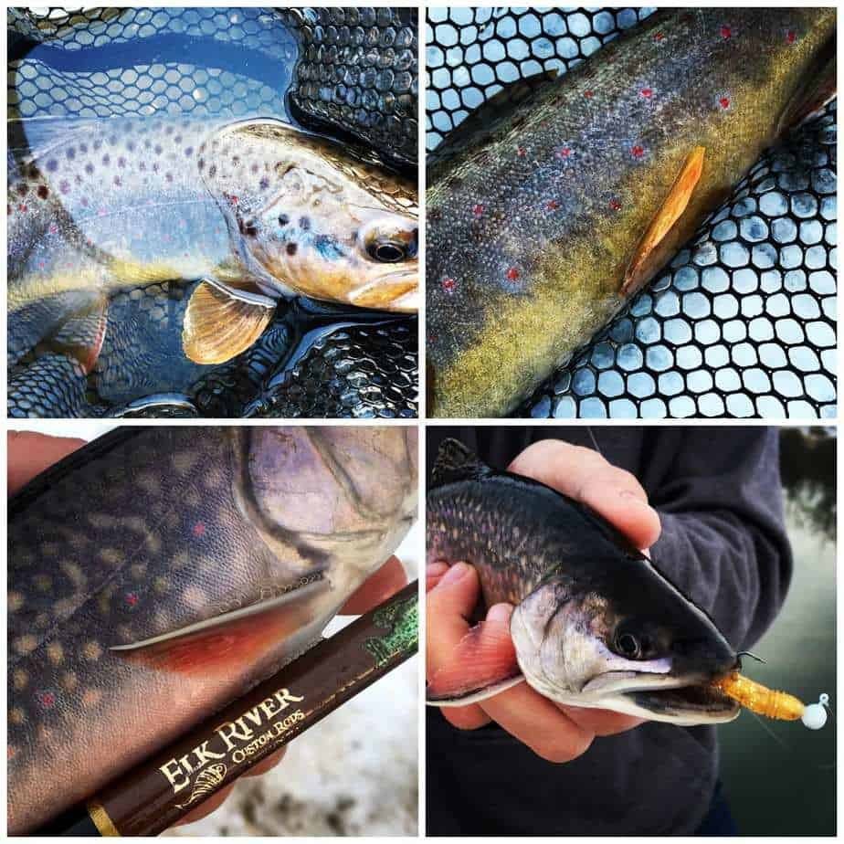 Wisconsin Trout Fishing