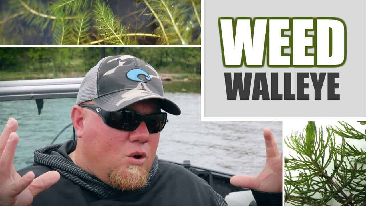Weed Walleye Fishing (Tips & Tactics)