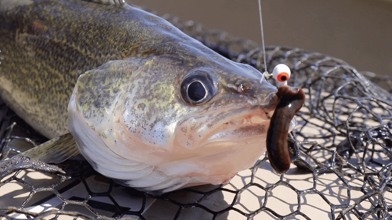 Devils Lakes (ND) Fishing Report – Zippy Dahl