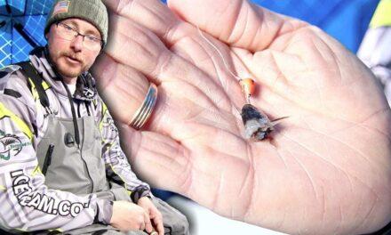 Killer Bait for Catching Negative Walleye