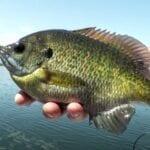 Fishing for Panfish Around Sunken Cribs