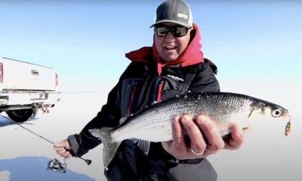Fishing Ciscos with Tony Roach