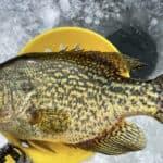 Northern Wisconsin Buzz Bite Report 2-3-2021