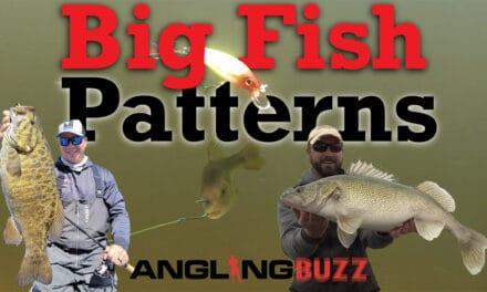 Big Fish Patterns