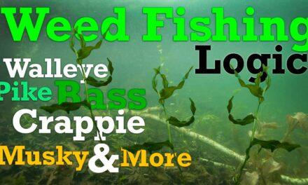 Weed Fishing Logic