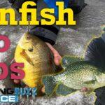 Ice Fishing Bluegills and Crappies (Plus Manitoba Greenback Walleyes!)